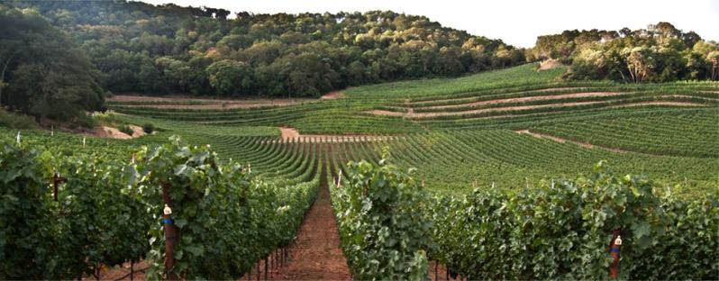 Gandona Estate Vineyards