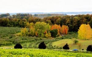 Leelanau Peninsula MI Wine